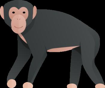 simpanz